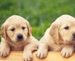 [我的宠物狗作文]关于描写宠物狗的作文400字